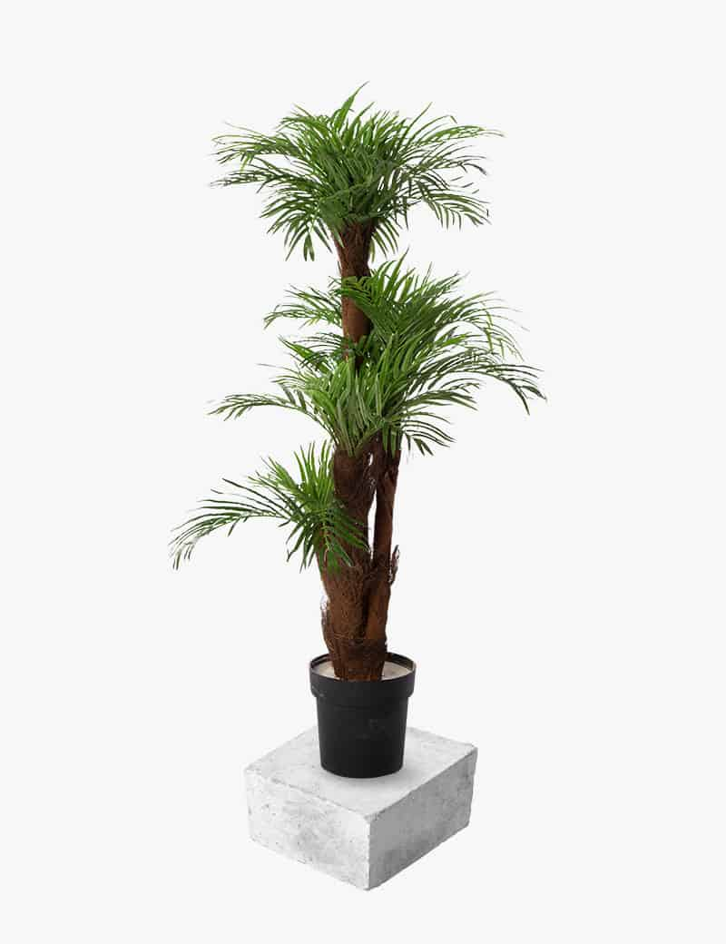עץ דקל רוביליני מלאכותי | גרדן מרקט - צמחיה מלאכותית איכותית