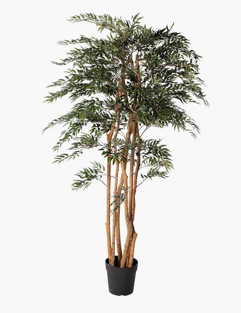 אלת המסטיק עץ מלאכותי | Garden Market - צמחיה מלאכותית איכותית