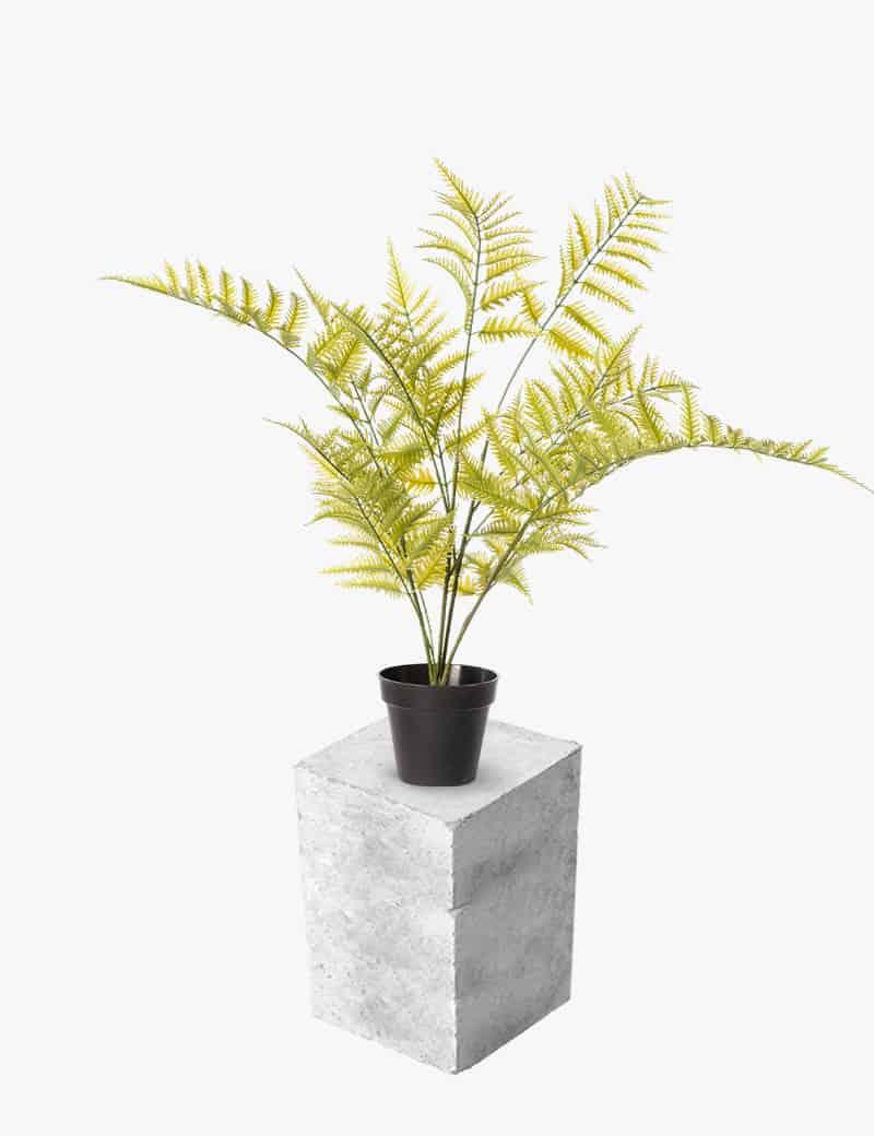 צמח שרך דבליה מלאכותי | Garden Market - צמחיה מלאכותית איכותית