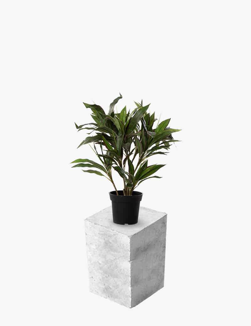 דרצנה מגוונת ננסית מלאכותית | Garden Market - צמחיה מלאכותית