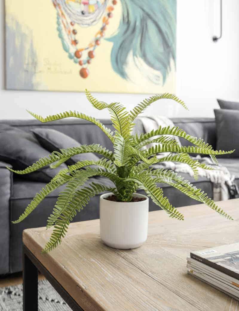 עציץ שרך כליין לסלון | גרדן מרקט - צמחיה מלאכותית איכותית
