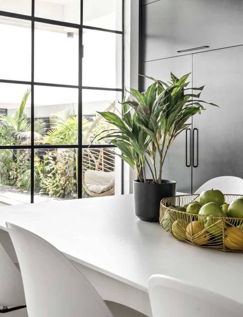 צמח דרצנה מגוונת ננסית לעיצוב הבית | גרדן מרקט - צמחיה מלאכותית איכותית