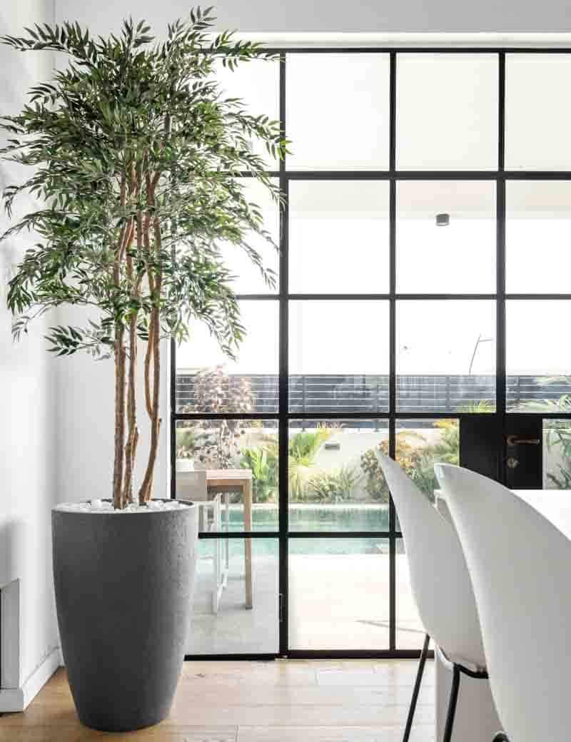 צמח אלת המסטיק למרפסת | גרדן מרקט - צמחיה מלאכותית איכותית