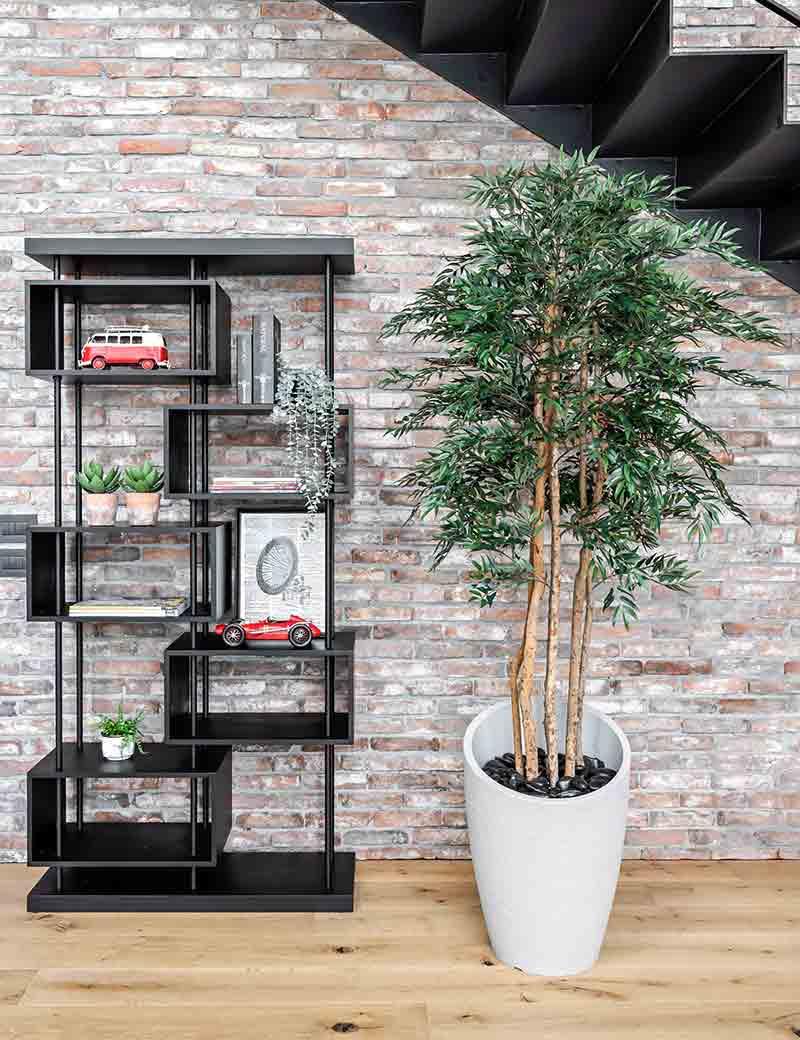 צמח אלת המסטיק למשרד | גרדן מרקט - צמחיה מלאכותית איכותית