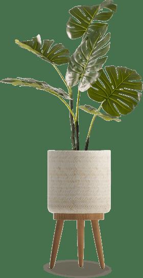 צמחייה מלאכותית ייחודית של גרדן מרקט