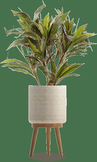 צמחים מלאכותיים יחודיים של גרדן מרקט