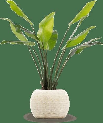 צמחיה מלאכותית איכותית של גרדן מרקט